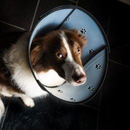 animalsilver Pet Airs Halskrause mit abnehmbaren...
